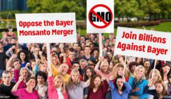 oppose-bayer-monsanto-merger-fb